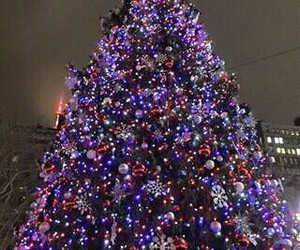 decoracion, festividad, and frío image