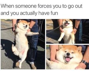funny, dog, and fun image