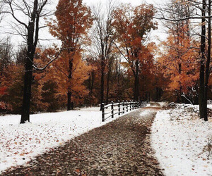 fall, winter, and snow image