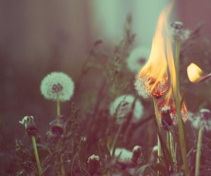 dandelions, fire, and photography image