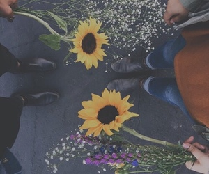 flowers, indie, and sunflower image