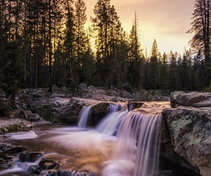 forrest and nature image