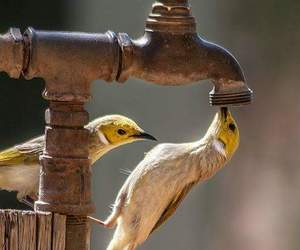 birds, drink, and thirst image
