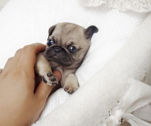 baby, cutie, and dog image