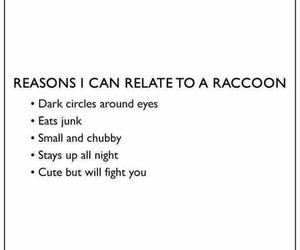 raccoon and relatable image