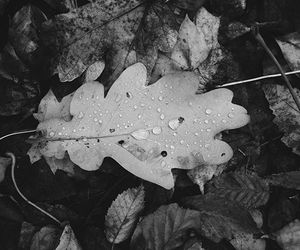 autumn, blackandwhite, and leaf image