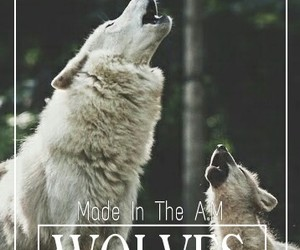 cancion, song, and wolves image