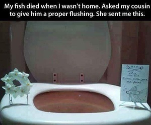 funny, fish, and funeral image