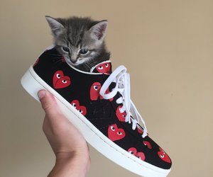animals, cat, and rawr image