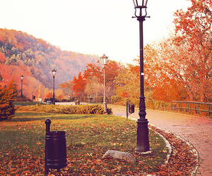 autumn, leaves, and cold image