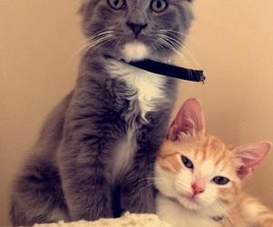 animals, cat, and cuddle image