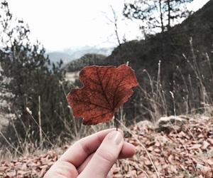 autumn, brown, and leave image