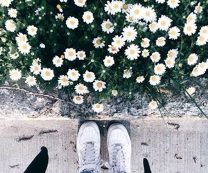 flowers, shoes, and white image