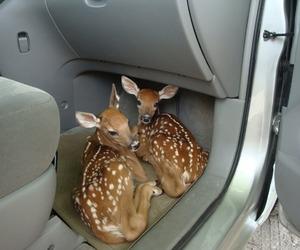 deer, cute, and animal image