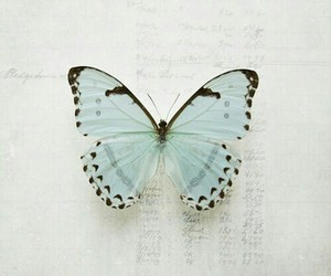 butterfly, blue, and vintage image