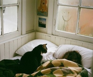 cat, vintage, and bed image