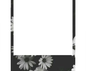 overlay and polaroid image