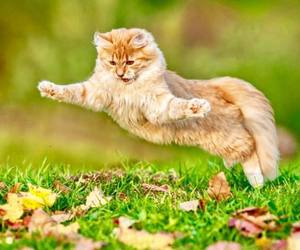 animals, cats, and autumn image