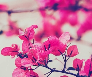 <3, fall, and pink image