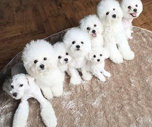 cuteness, doggie, and puppies image
