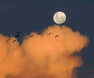 birds, clouds, and tonight image