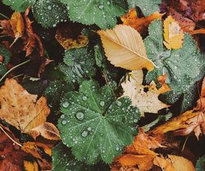 leaves and rain image