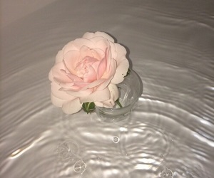 flowers, rose, and water image