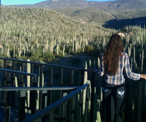 beauty, paisaje, and cactus image