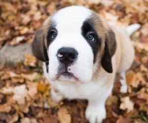 animal, puppy, and щенок image