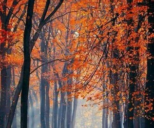 arbres, nature, and feuille image