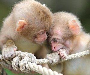 animals, baby, and monkey image