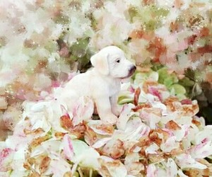 dog, flower, and my image