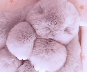 animals, baby, and design image