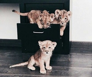 animal, animals, and photography image