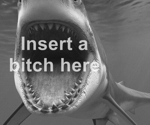 bitch, shark, and funny image