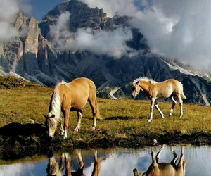 horses, animals, and landscape image
