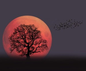 birds, moon, and nature image