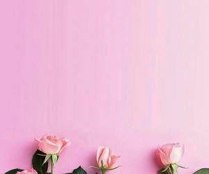 pink, rose, and wallpaper image