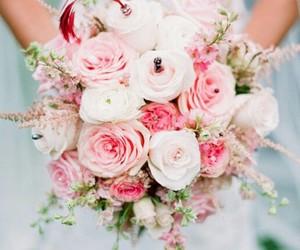 belleza, rosas, and flores image