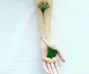 green, nature, and tato image
