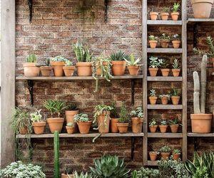 cactus, succulents, and plants image