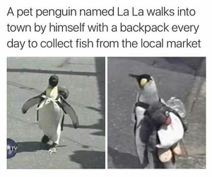 funny, cute, and penguin image