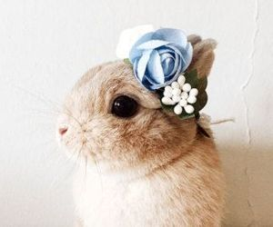 animals, easter bunny, and rabbit image
