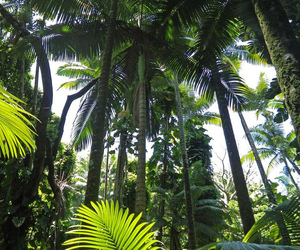green, summer, and tropical image
