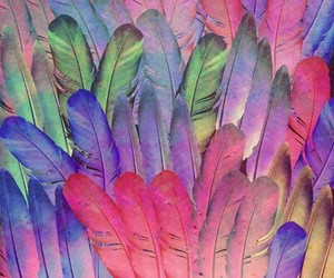 background, colorful, and feather image