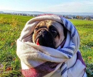 autumn, dogs, and funny dogs image