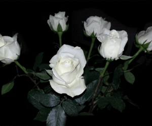 flowers, fresh, and white image