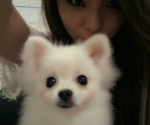 ailee, kpop, and dog image