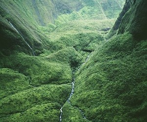 nature, green, and river image