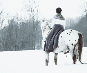 horse and winter image